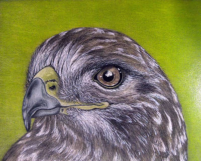 Buzzard Drawing - In The Eye Of by Jo Prevost
