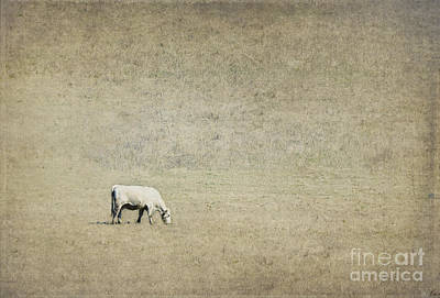 Cow Digital Art - In The Pasture by Elena Nosyreva