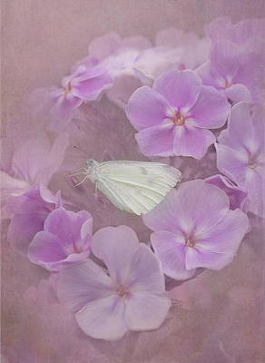 Cabbage White Butterfly Photograph - In The Pink by Angie Vogel