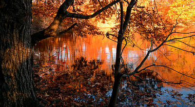 Fall Foliage Photograph - In The Pond by Lourry Legarde
