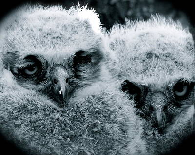 Owl Photograph - In The Shadows by AnnaJo Vahle