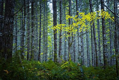 In The Woods Print by Belinda Greb