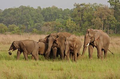 Large Mammals Photograph - Indian Asian Elephant, Herd by Jagdeep Rajput