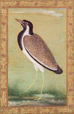 Lapwing Drawing - Indian Lapwing by Mansur