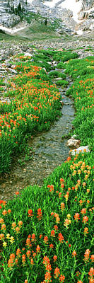 Cascade Canyon Photograph - Indian Paintbrush Wildflowers by Panoramic Images