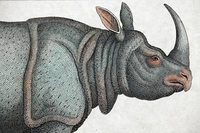 Indian Rhinoceros Print by Paul D Stewart