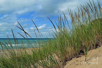 Indiana Dunes Sea Oats Print by Amy Lucid