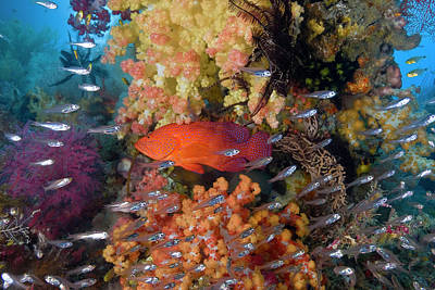 Ies Photograph - Indonesia, Raja Ampat by Jaynes Gallery