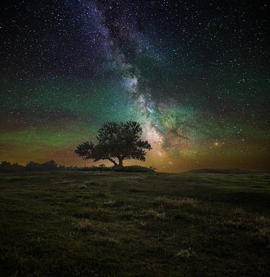 Tree Spirit Photograph - Infinity by Aaron J Groen