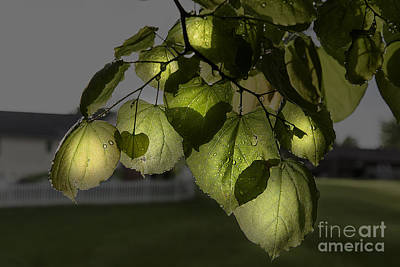 Getty Photograph - Inner Glow by Larry Braun