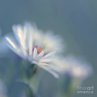 Square Flower Photograph - Innocence 03c by Variance Collections