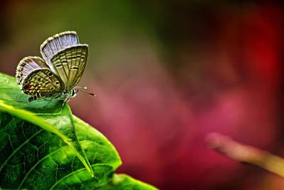 Suradej Photograph - Innocent To This World by Suradej Chuephanich