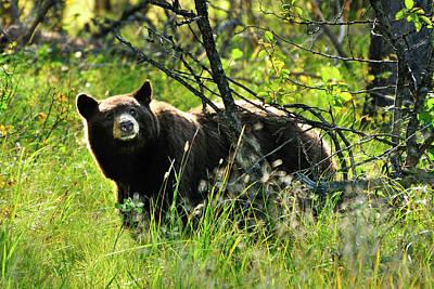 Bear Photograph - Inquisitive Bear by Greg Norrell