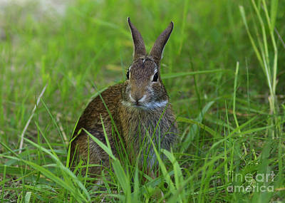 Inquisitive Rabbit Watching You Print by Inspired Nature Photography Fine Art Photography