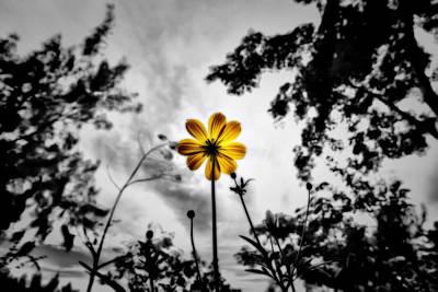 Suradej Photograph - Inspire by Suradej Chuephanich