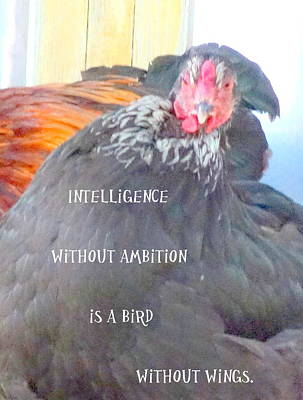 Intelligence Without Wings Is A Bird Without Ambition  Original by Hilde Widerberg