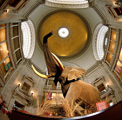 Square Image Photograph - Interiors Of A Museum, National Museum by Panoramic Images