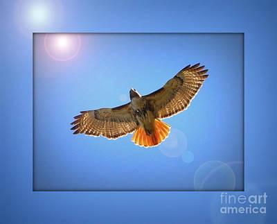 Hunting Bird Photograph - Into The Light by Carol Groenen
