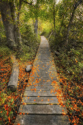 The Nature Center Photograph - Into The Woods - Retzer Nature Center - Waukesha Wisconsin by The  Vault - Jennifer Rondinelli Reilly