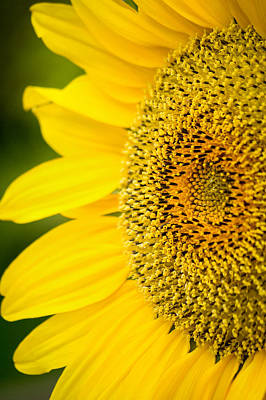 Flowers Photograph - Intricate Beauty by Garvin Hunter