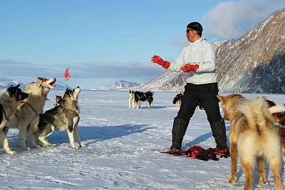 Husky Photograph - Inuit Hunter Feeding Walrus Meat To Dogs by Louise Murray