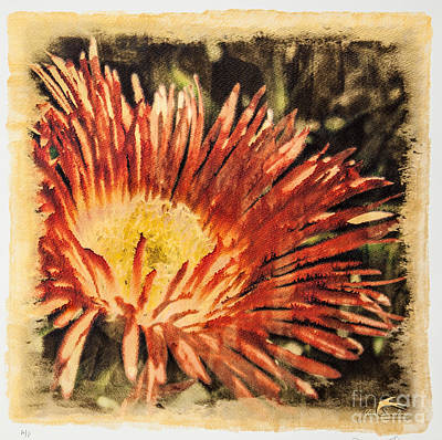 Gold Tone Photograph - Iridescent Red Flower # 1 - Special Printing Process by Jim Swallow