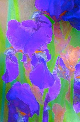 Iris 59 Print by Pamela Cooper