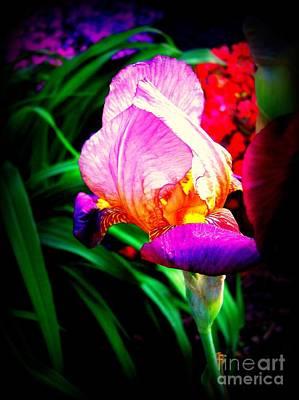 Iris Glow Print by Janine Riley