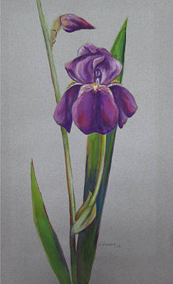 Spring Bulbs Painting - Iris I by Sheila Diemert