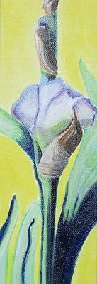 Iris In Bloom Print by Melissa Torres