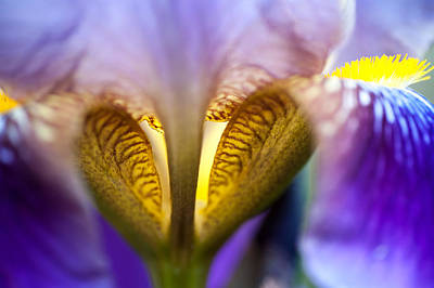 Iris Secret Life. Macro Print by Jenny Rainbow