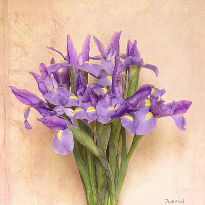Iris Square  Print by Heidi Smith