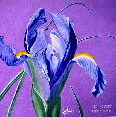 Print Of Irises Painting - Iris by Sylvie Heasman