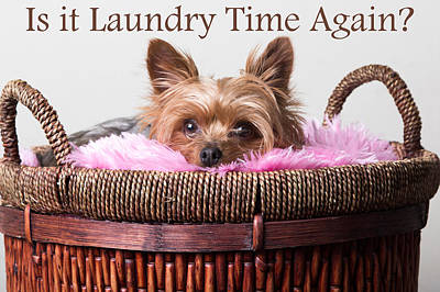 Pup Digital Art - Is It Laundry Time Again? by Purple Moon