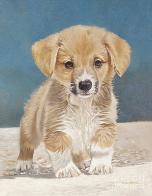 Corgi Drawing - Is That A Snake by Helen Bailey