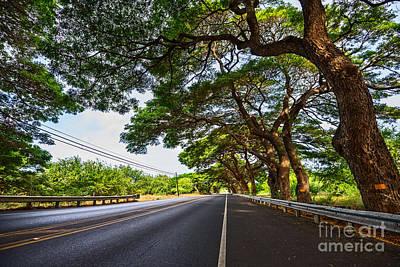 Paradise Road Photograph - Island Drive  by Jamie Pham