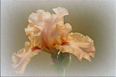 Flora Photograph - Isobel by Elaine Teague