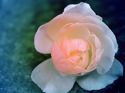 Peach Photograph - It Was A Rainy Day by  The Art Of Marilyn Ridoutt-Greene