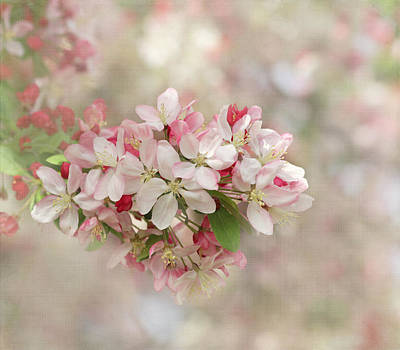 Kim Photograph - It's Blossom Time by Kim Hojnacki