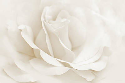 Ivory Rose Photograph - Ivory Ballerina Rose Flower by Jennie Marie Schell