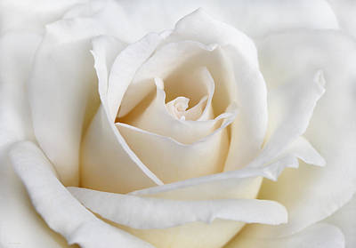 Ivory Rose Photograph - Ivory Rose Flower by Jennie Marie Schell