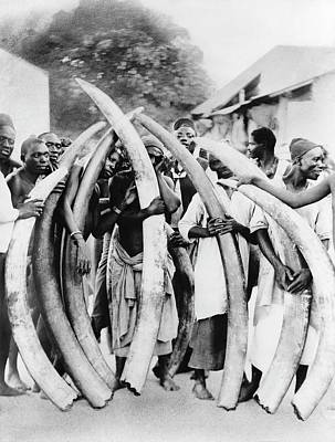 Ivory Trade In Africa Print by Library Of Congress