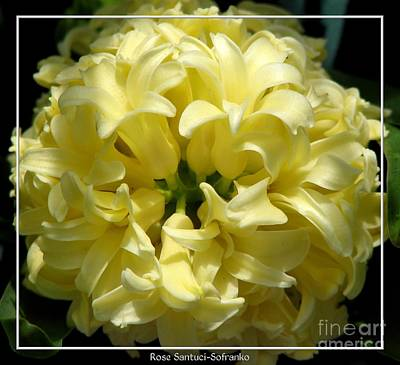Gardening Photograph - Ivory White Hyacinths Flower by Rose Santuci-Sofranko