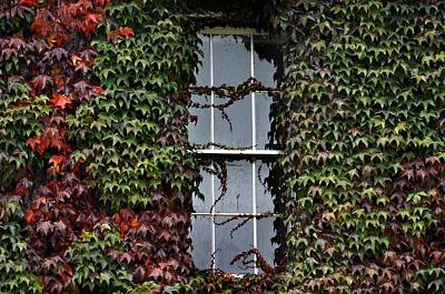 Outlook Photograph - Ivy Covered Window by Henry Kowalski