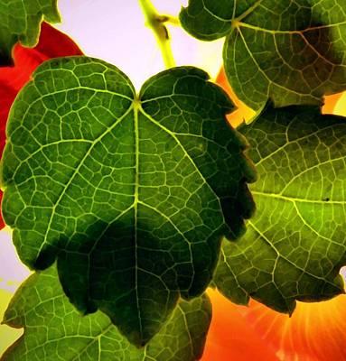 Ivy Light Print by Chris Berry