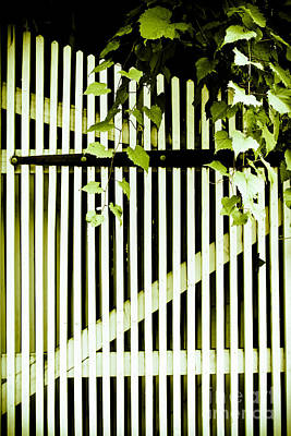 Ivy Over White Picket Gate Print by Colleen Kammerer