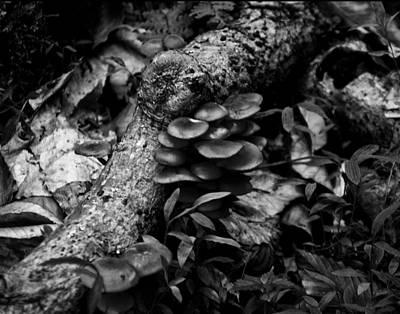 Jack-o-lantern Digital Art - Jack O Lantern Mushroom by Chris Flees