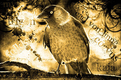 Jackdaw Print by Toppart Sweden