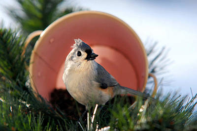 Titmouse Photograph - Jackpot Holiday by Christina Rollo