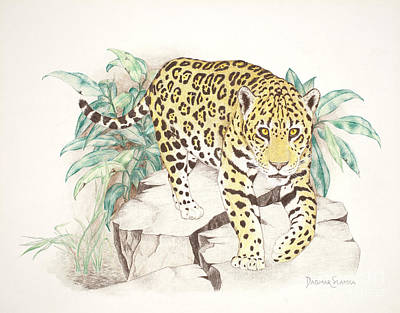 Rainforest Drawing - Jaguar Walk by Dag Sla